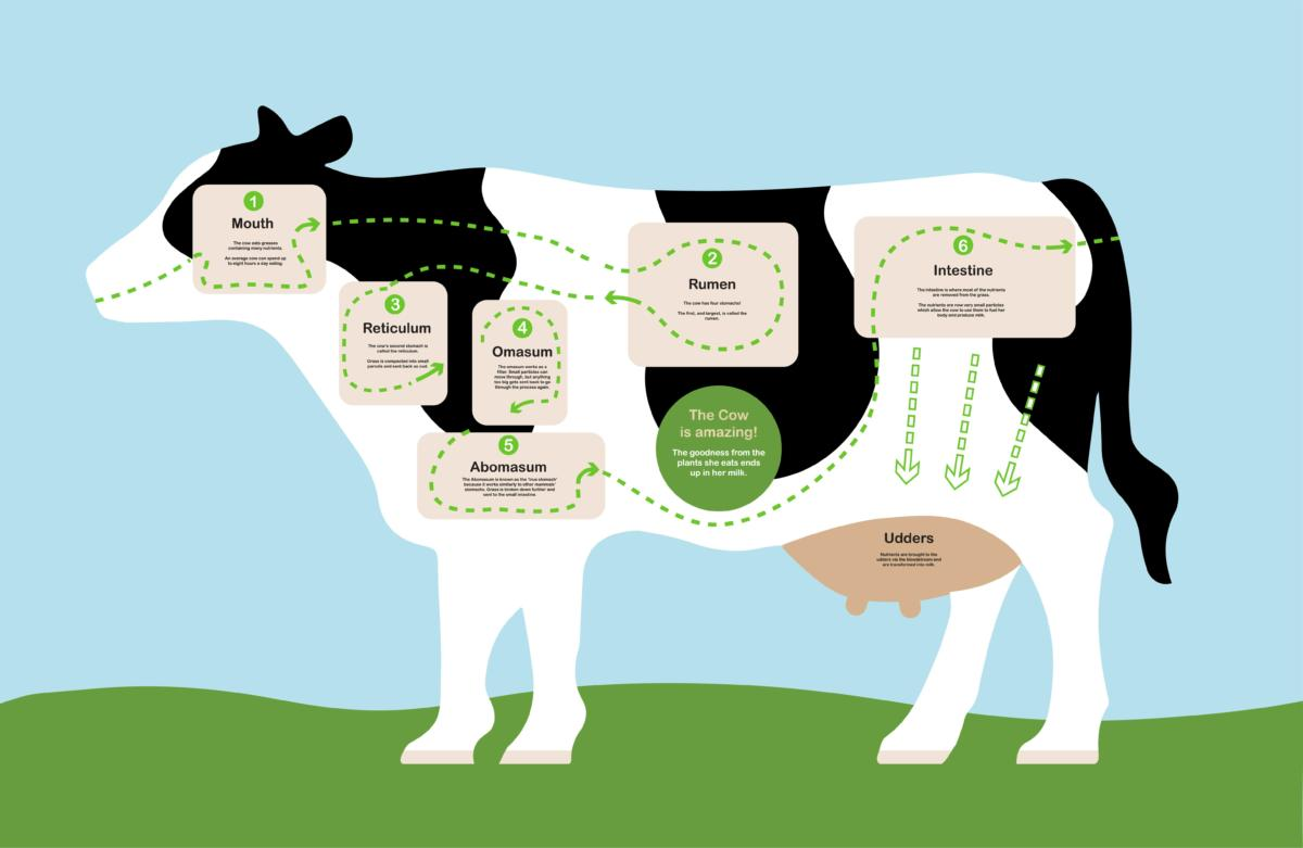 Digital Days Out Friday 10th April - How A Cow Makes Milk!