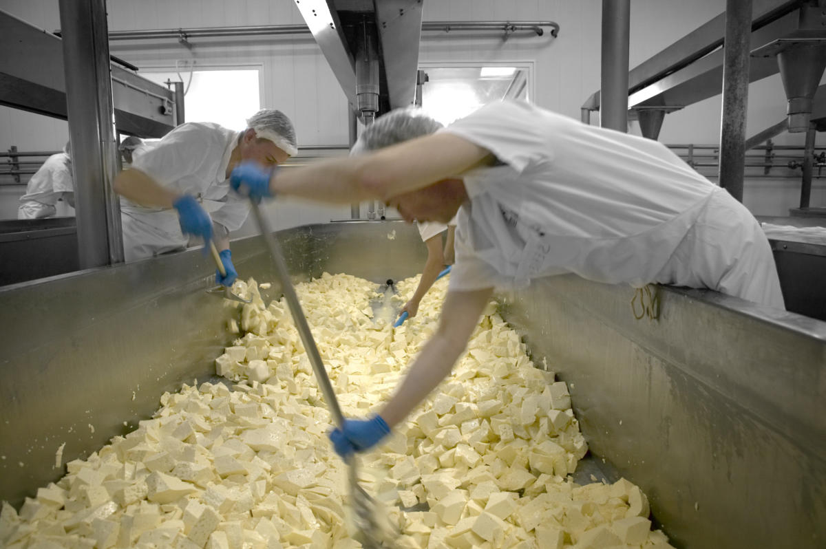Digital Days Out Tuesday 14th April: Cheese-making Process Step 8 - Milling