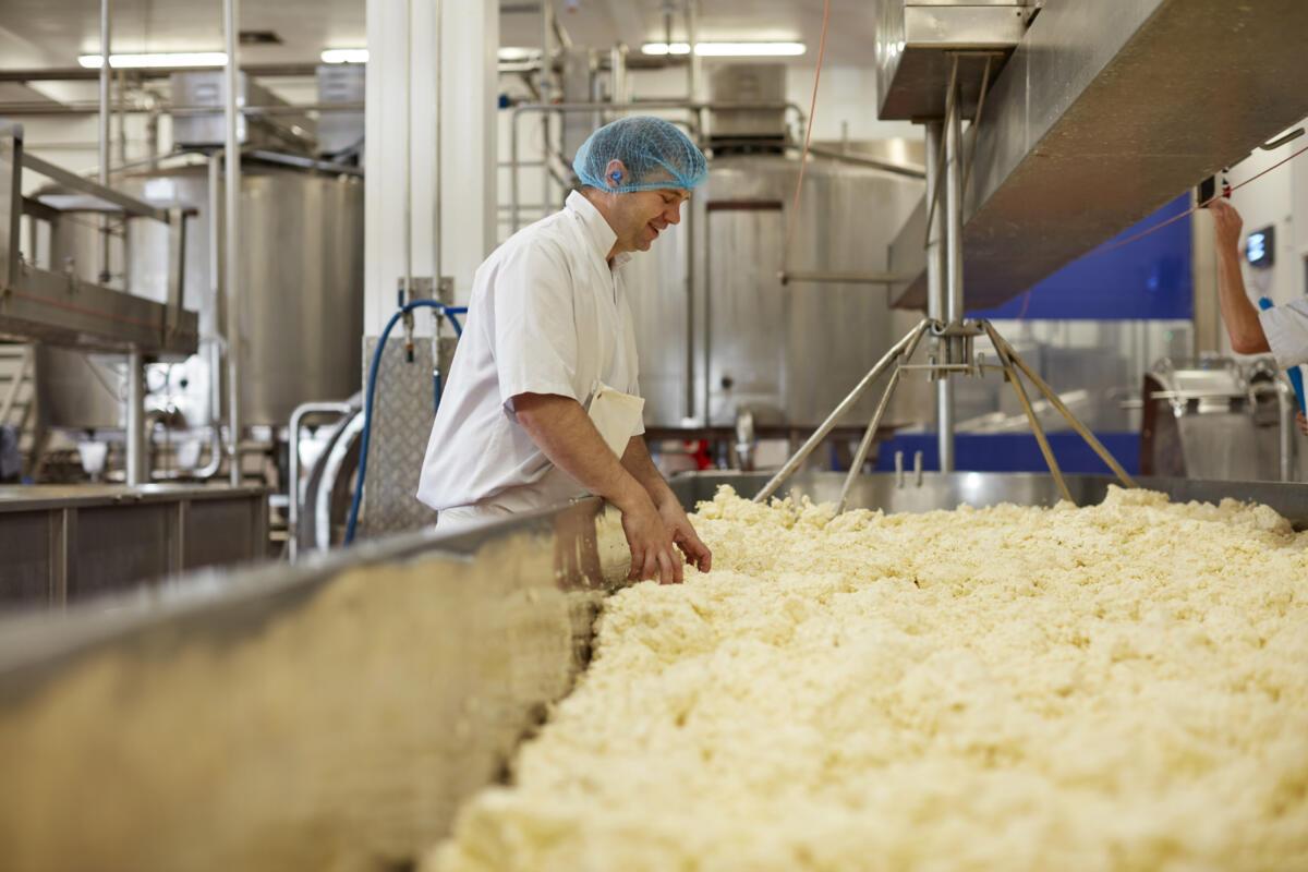 Cheese Maker Vacancies